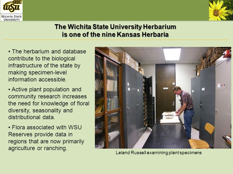 The Wichita State University Herbarium fills a critical gap in our understanding of Great Plains flora Our herbarium contains many specimens from south-central Kansas and regions that are poorly represented in collections