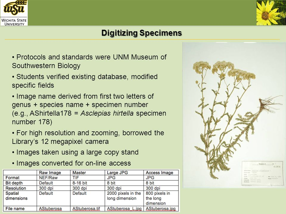 Long-Term Goals Provide on-line access to biodiversity data and - ecological modeling - specimen/species mapping http://herbarium.uvu.edu/Virtual/