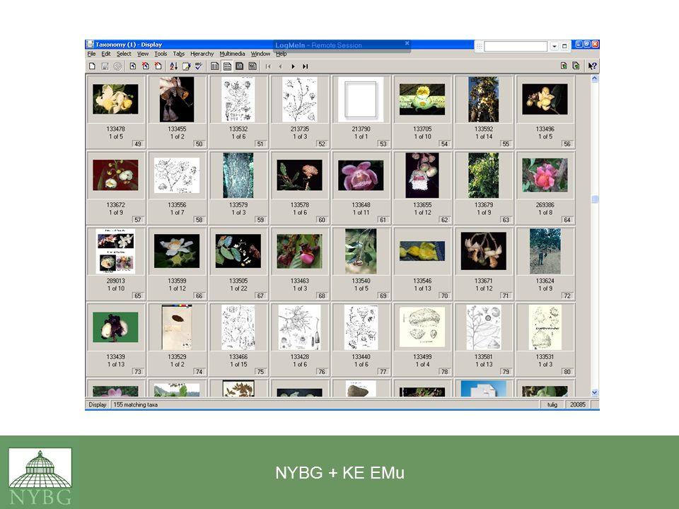 NYBG + KE EMu