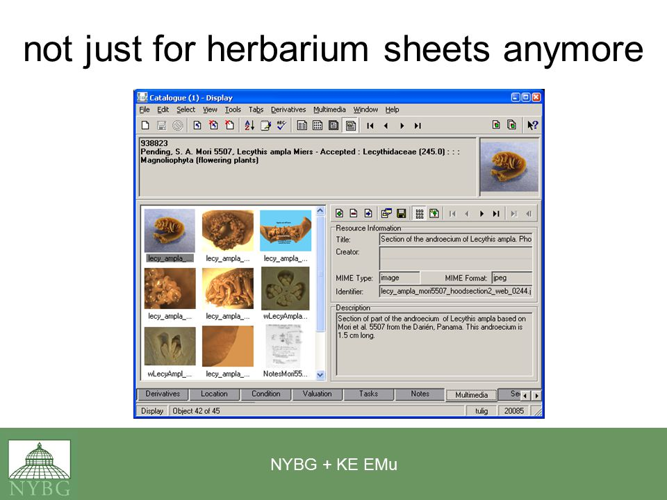 NYBG + KE EMu not just for herbarium sheets anymore