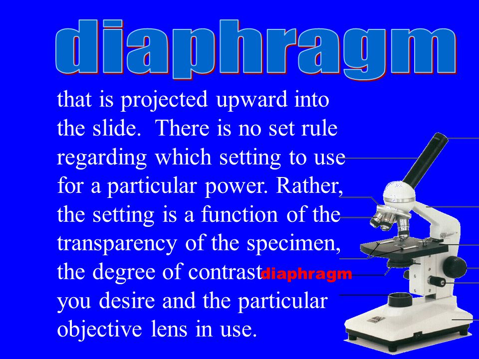 diaphragm that is projected upward into the slide.