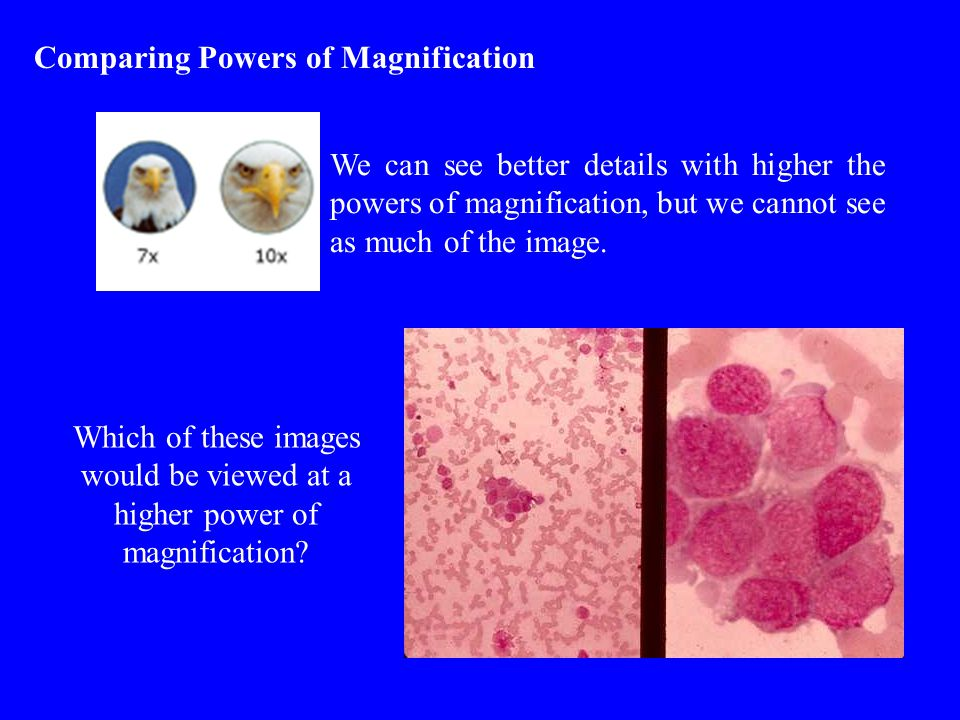 Comparing Powers of Magnification We can see better details with higher the powers of magnification, but we cannot see as much of the image.