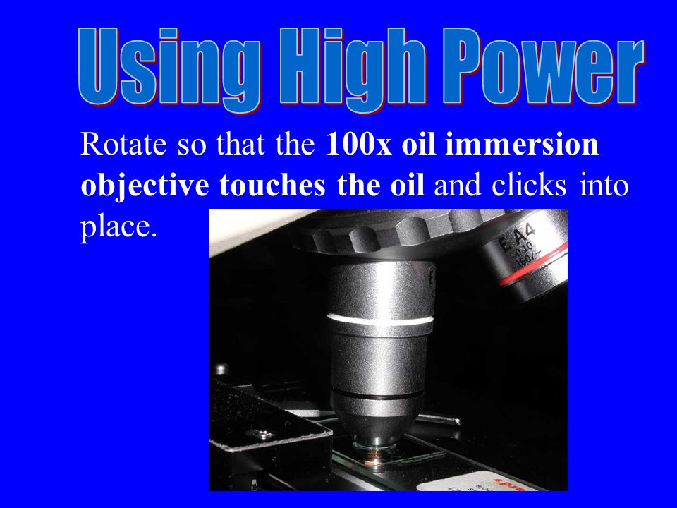 Rotate so that the 100x oil immersion objective touches the oil and clicks into place.