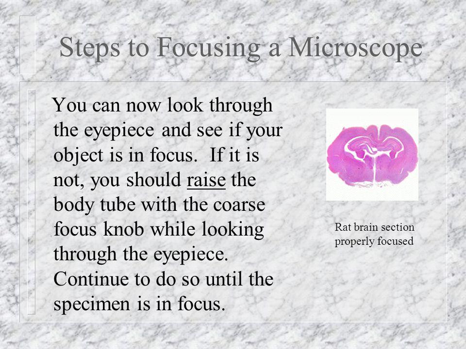 Steps to Focusing a Microscope You can now look through the eyepiece and see if your object is in focus.