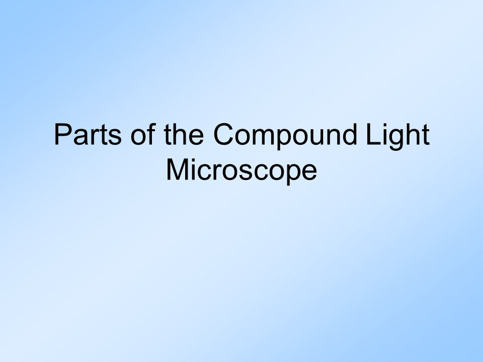 Microscope Parts and Functions B.Arm: supports tube & connects it to the base C.