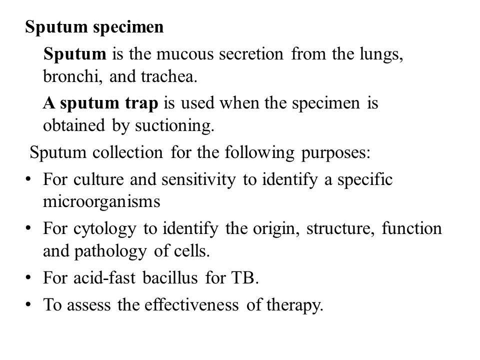 Sputum specimen Sputum is the mucous secretion from the lungs, bronchi, and trachea. A sputum trap is used when the specimen is obtained by suctioning