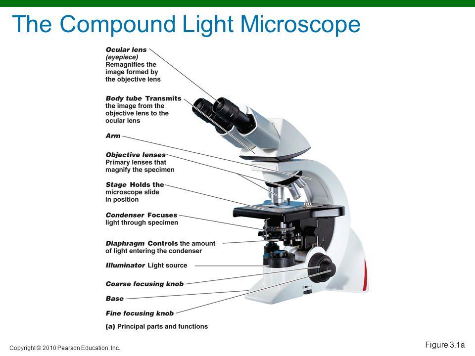 Copyright © 2010 Pearson Education, Inc. Figure 3.1a The Compound Light Microscope