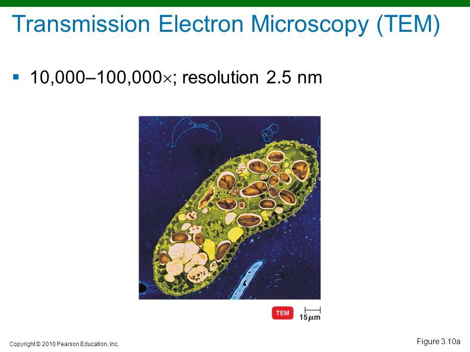 Copyright © 2010 Pearson Education, Inc. Figure 3.10a Transmission Electron Microscopy (TEM)  10,000–100,000  ; resolution 2.5 nm