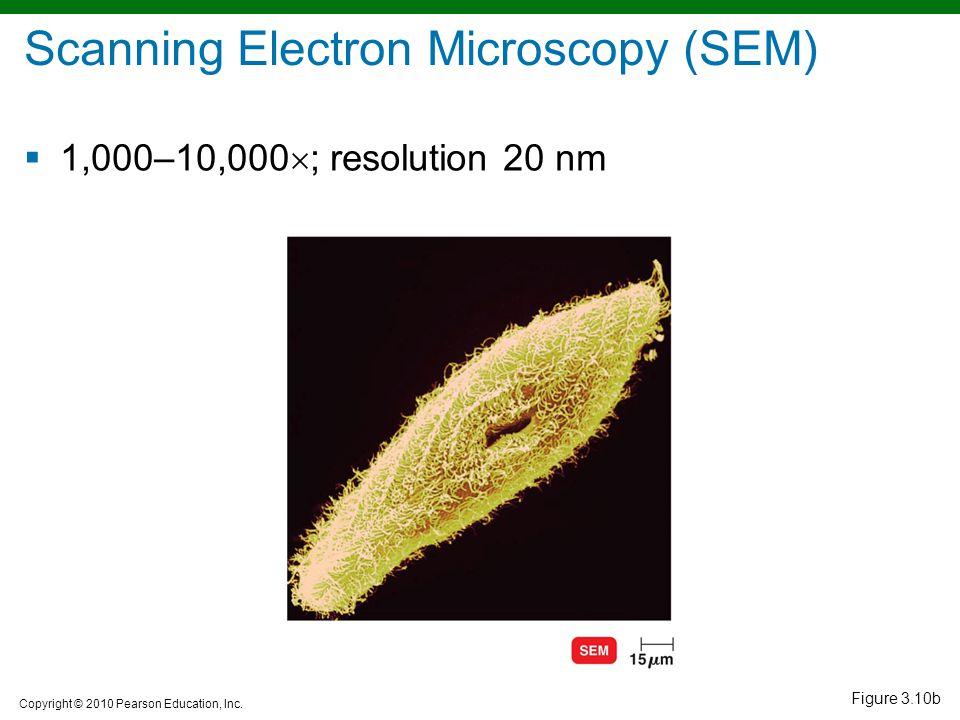 Copyright © 2010 Pearson Education, Inc. Figure 3.10b Scanning Electron Microscopy (SEM)  1,000–10,000  ; resolution 20 nm