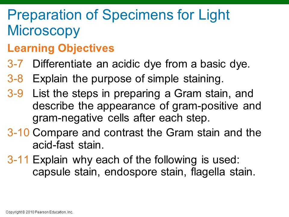 Copyright © 2010 Pearson Education, Inc. Learning Objectives 3-7Differentiate an acidic dye from a basic dye. 3-8Explain the purpose of simple stainin