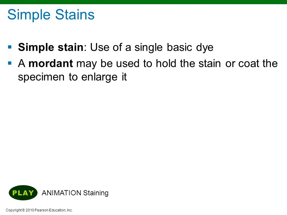 Copyright © 2010 Pearson Education, Inc.  Simple stain: Use of a single basic dye  A mordant may be used to hold the stain or coat the specimen to e
