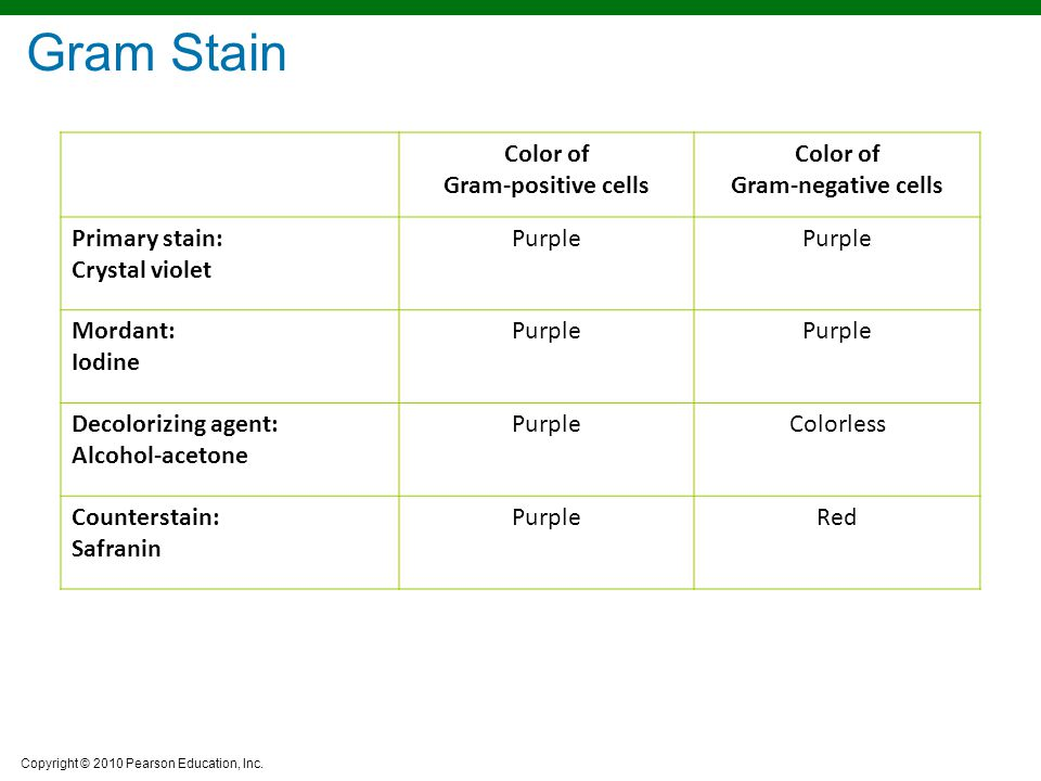 Copyright © 2010 Pearson Education, Inc. Color of Gram-positive cells Color of Gram-negative cells Primary stain: Crystal violet Purple Mordant: Iodin