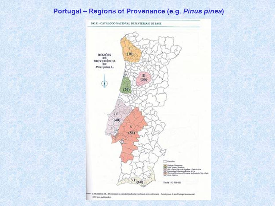 Portugal – Regions of Provenance (e.g. Pinus pinea)