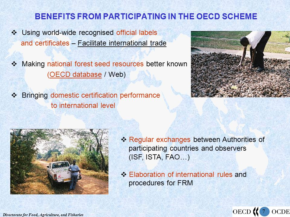 Directorate for Food, Agriculture, and Fisheries 7 BENEFITS FROM PARTICIPATING IN THE OECD SCHEME  Using world-wide recognised official labels and certificates – Facilitate international trade  Making national forest seed resources better known (OECD database / Web)  Bringing domestic certification performance to international level  Regular exchanges between Authorities of participating countries and observers (ISF, ISTA, FAO…)  Elaboration of international rules and procedures for FRM