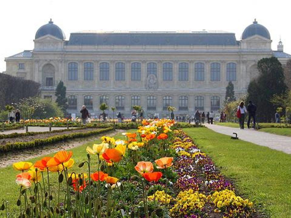 Rapid digitization of P Herbarium The French Museum