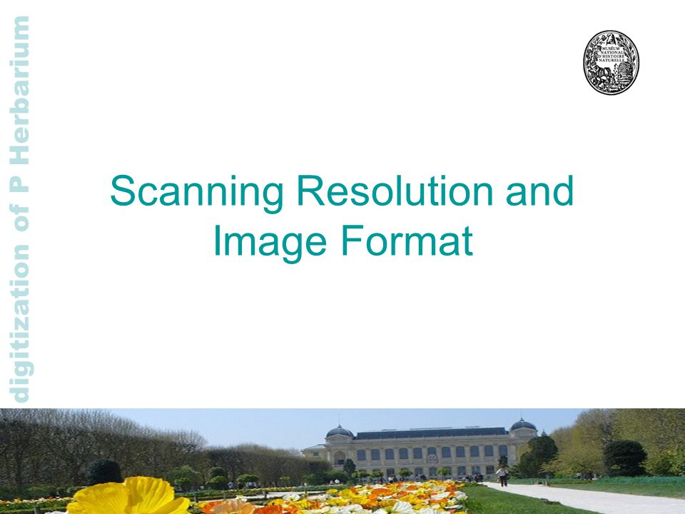 Rapid digitization of P Herbarium Scanning Resolution and Image Format