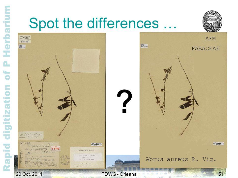 Rapid digitization of P Herbarium Spot the differences … AFM FABACEAE Abrus aureus R.