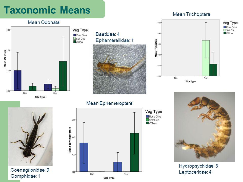 Mean Odonata Taxonomic Means Coenagrionidae: 9 Gomphidae: 1 Baetidae: 4 Ephemerellidae: 1 Mean Ephemeroptera Mean Trichoptera Hydropsychidae: 3 Leptoceridae: 4