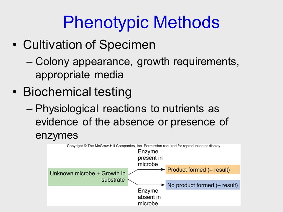 Phenotypic Methods Cultivation of Specimen –Colony appearance, growth requirements, appropriate media Biochemical testing –Physiological reactions to