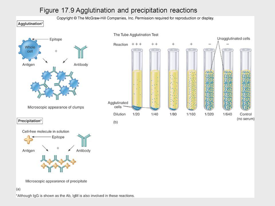 Insert figure 17.10 Cellular\molecular view Figure 17.9 Agglutination and precipitation reactions