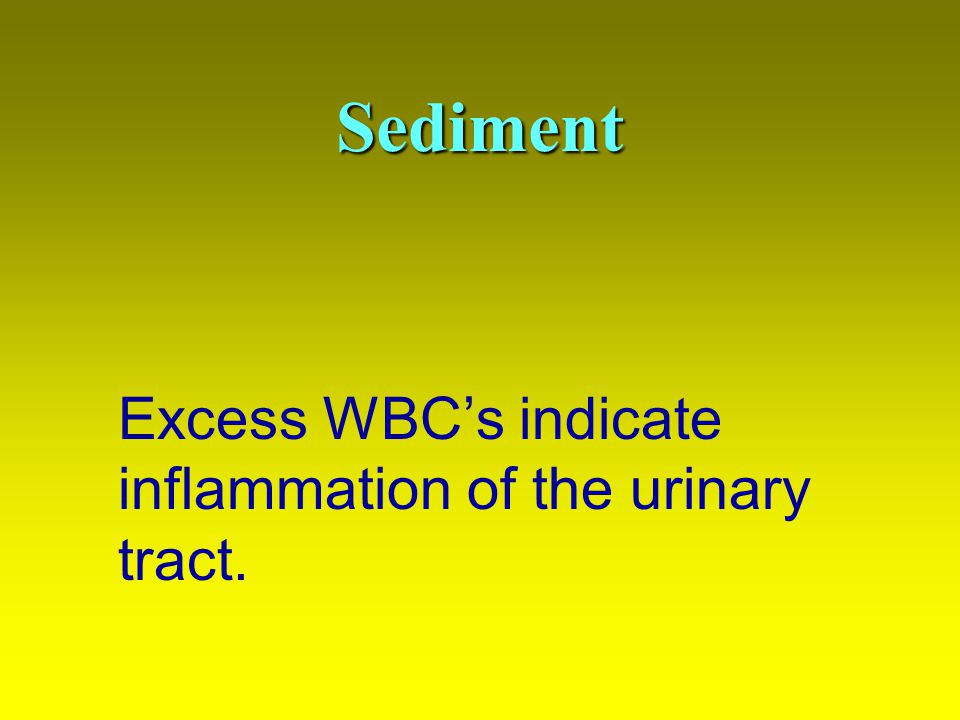 Sediment Excess WBC's indicate inflammation of the urinary tract.