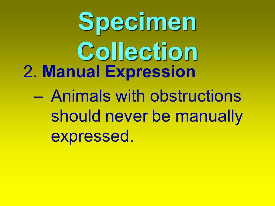 Specimen Collection 3.