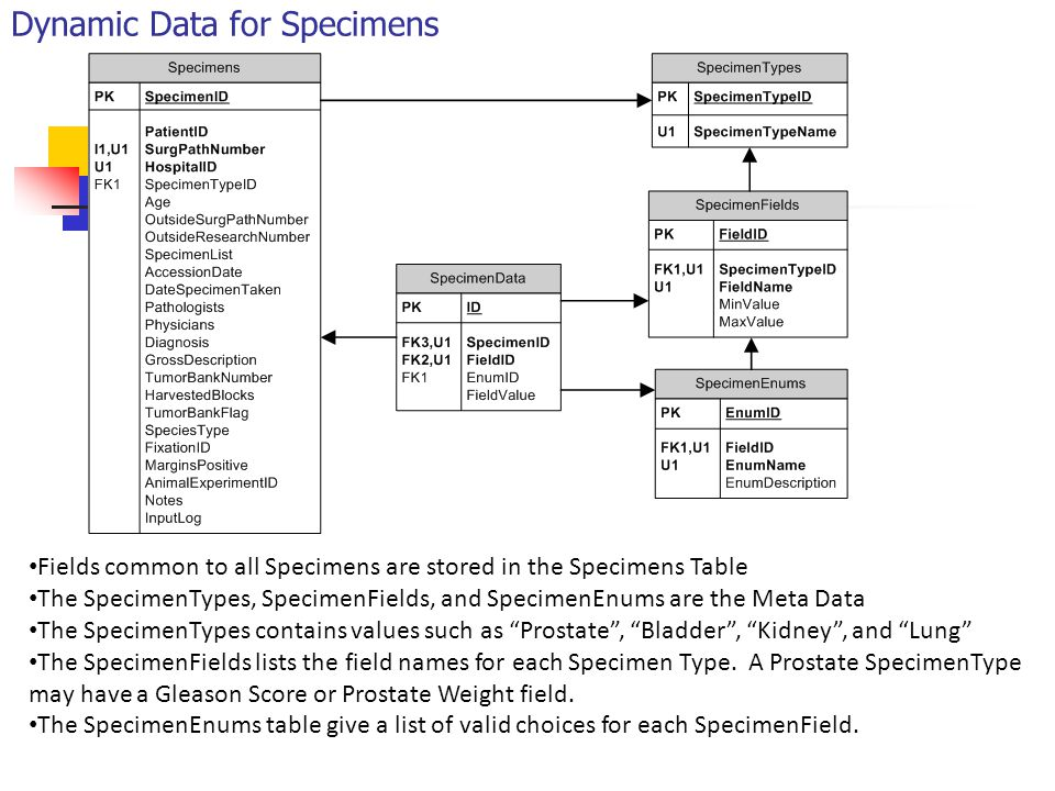 Dynamic Data for Specimens Fields common to all Specimens are stored in the Specimens Table The SpecimenTypes, SpecimenFields, and SpecimenEnums are the Meta Data The SpecimenTypes contains values such as Prostate , Bladder , Kidney , and Lung The SpecimenFields lists the field names for each Specimen Type.