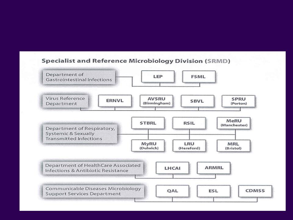 SRMD Organisational Structure