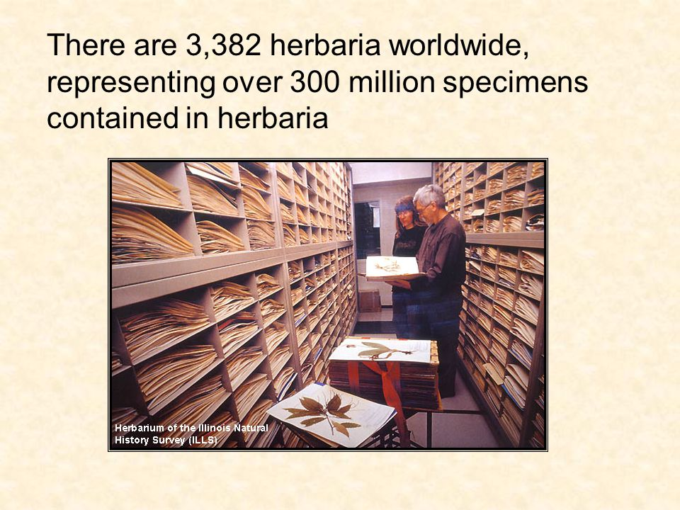 Herbarium specimens document where and when a plant grew