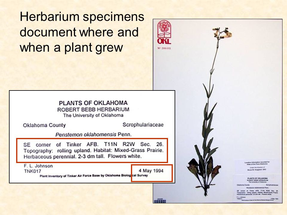 This allows us to understand the ecology and geographic ranges of species For example, the counties in VA where Campanulastrum americanum has been found