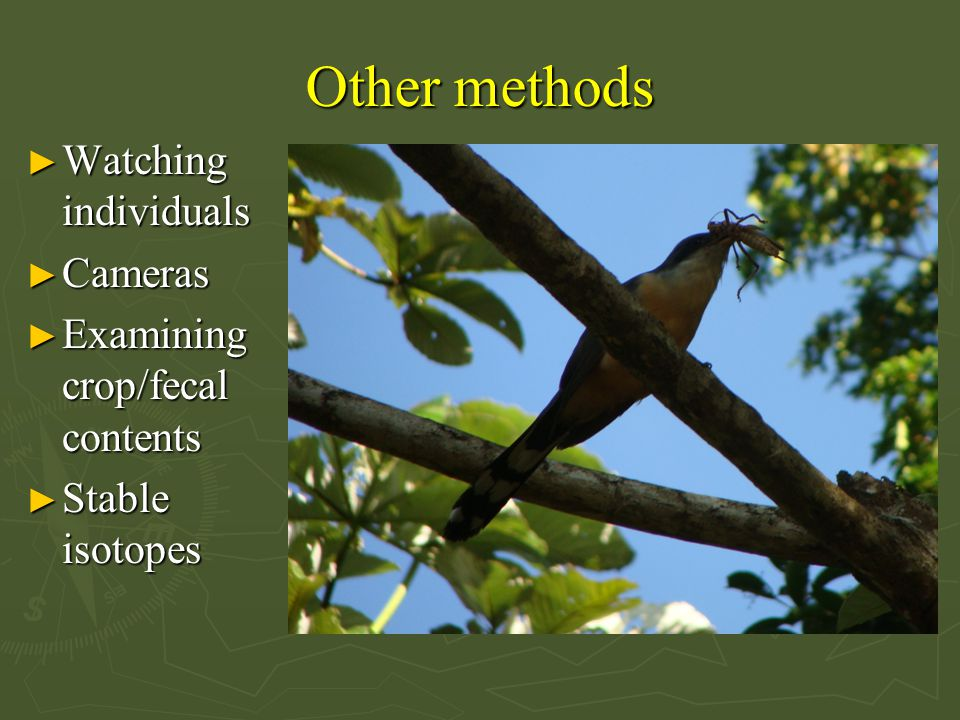 Other methods ► Watching individuals ► Cameras ► Examining crop/fecal contents ► Stable isotopes