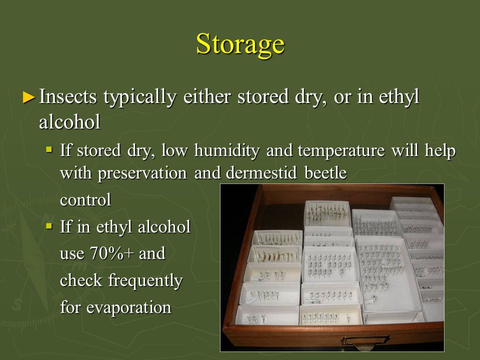 Storage ► Insects typically either stored dry, or in ethyl alcohol  If stored dry, low humidity and temperature will help with preservation and dermestid beetle control  If in ethyl alcohol use 70%+ and check frequently for evaporation