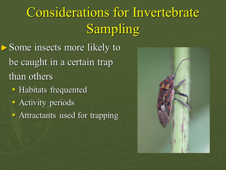 Considerations for Invertebrate Sampling ► Some insects more likely to be caught in a certain trap than others  Habitats frequented  Activity periods  Attractants used for trapping