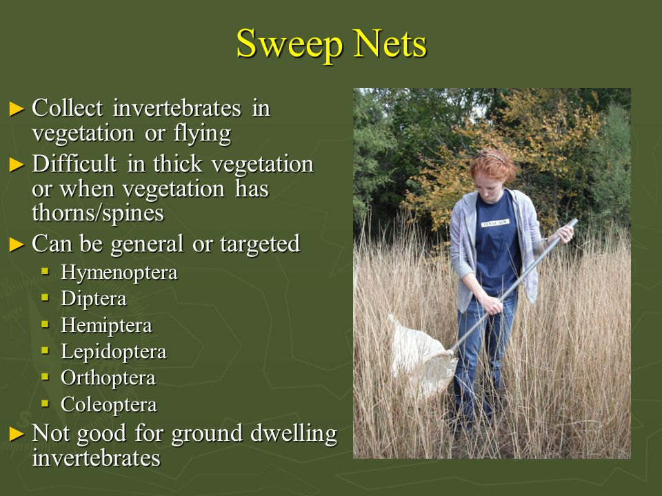 Sweep Nets ► Collect invertebrates in vegetation or flying ► Difficult in thick vegetation or when vegetation has thorns/spines ► Can be general or targeted  Hymenoptera  Diptera  Hemiptera  Lepidoptera  Orthoptera  Coleoptera ► Not good for ground dwelling invertebrates