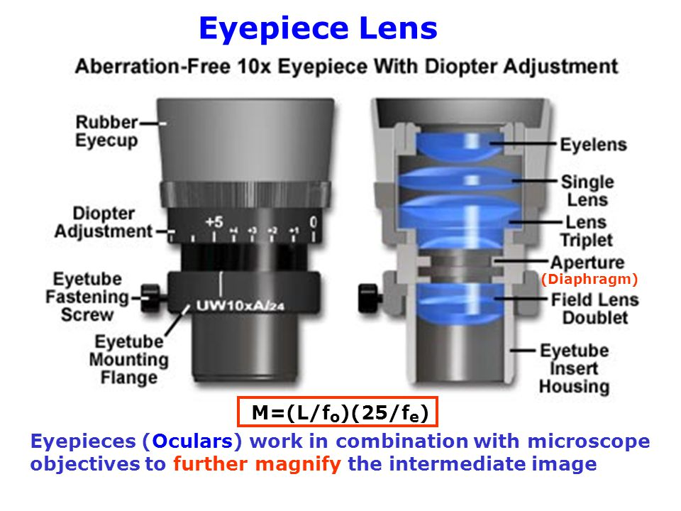 (Diaphragm) Eyepieces (Oculars) work in combination with microscope objectives to further magnify the intermediate image Eyepiece Lens M=(L/f o )(25/f