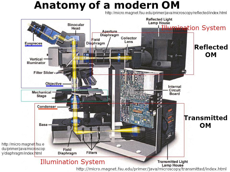Anatomy of a modern OM Illumination System Transmitted OM Reflected OM Illumination System http://micro.magnet.fsu.edu/primer/java/microscopy/transmit