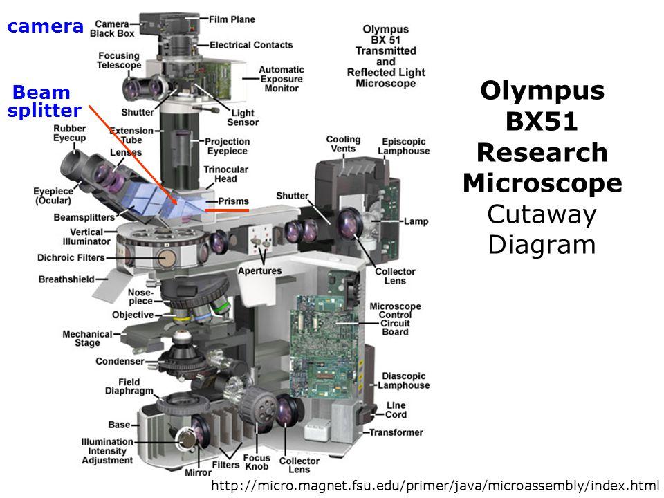 Olympus BX51 Research Microscope Cutaway Diagram Beam splitter camera http://micro.magnet.fsu.edu/primer/java/microassembly/index.html