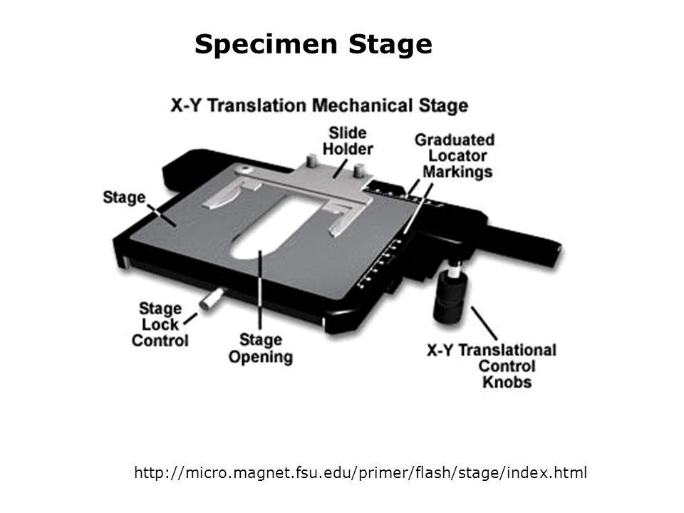 Specimen Stage http://micro.magnet.fsu.edu/primer/flash/stage/index.html