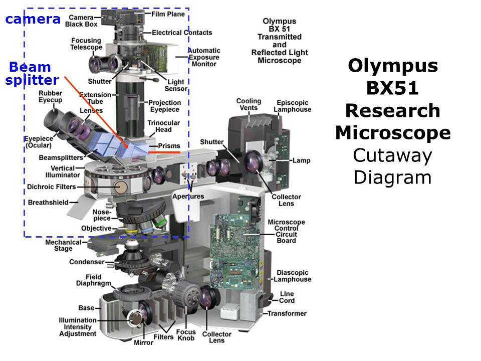 Olympus BX51 Research Microscope Cutaway Diagram Beam splitter camera