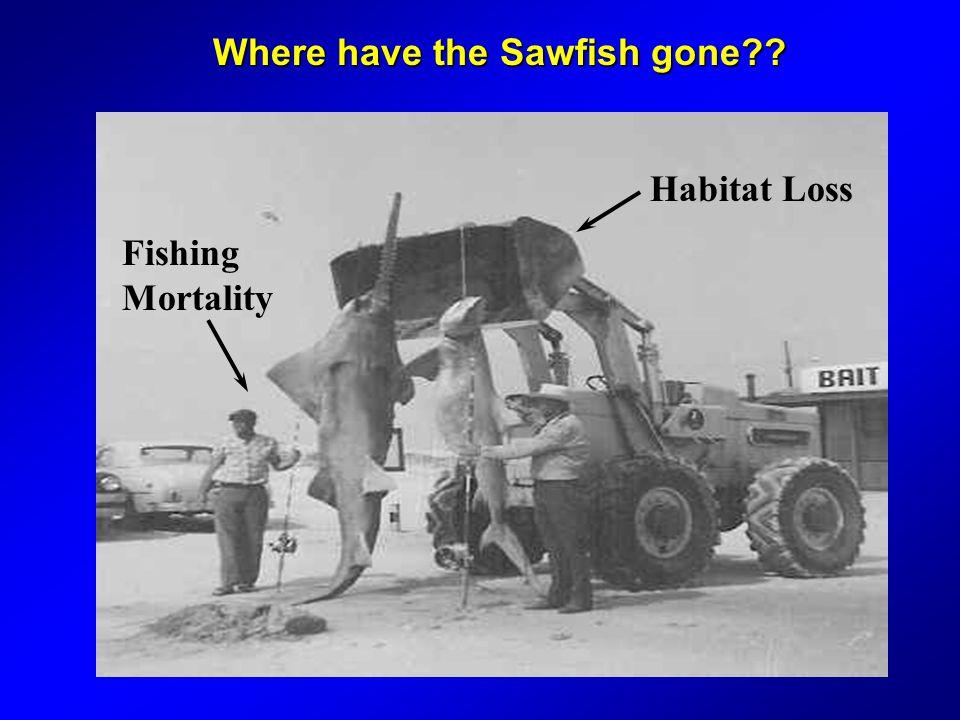 Habitat Loss Fishing Mortality