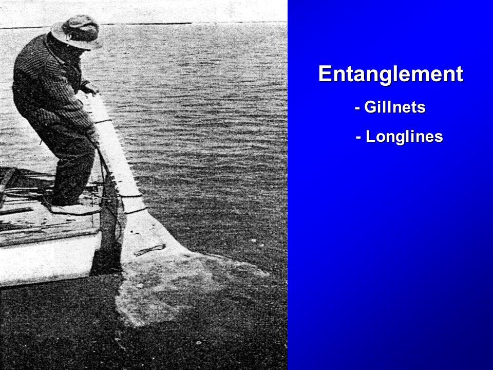 Entanglement - Gillnets - Longlines - Longlines