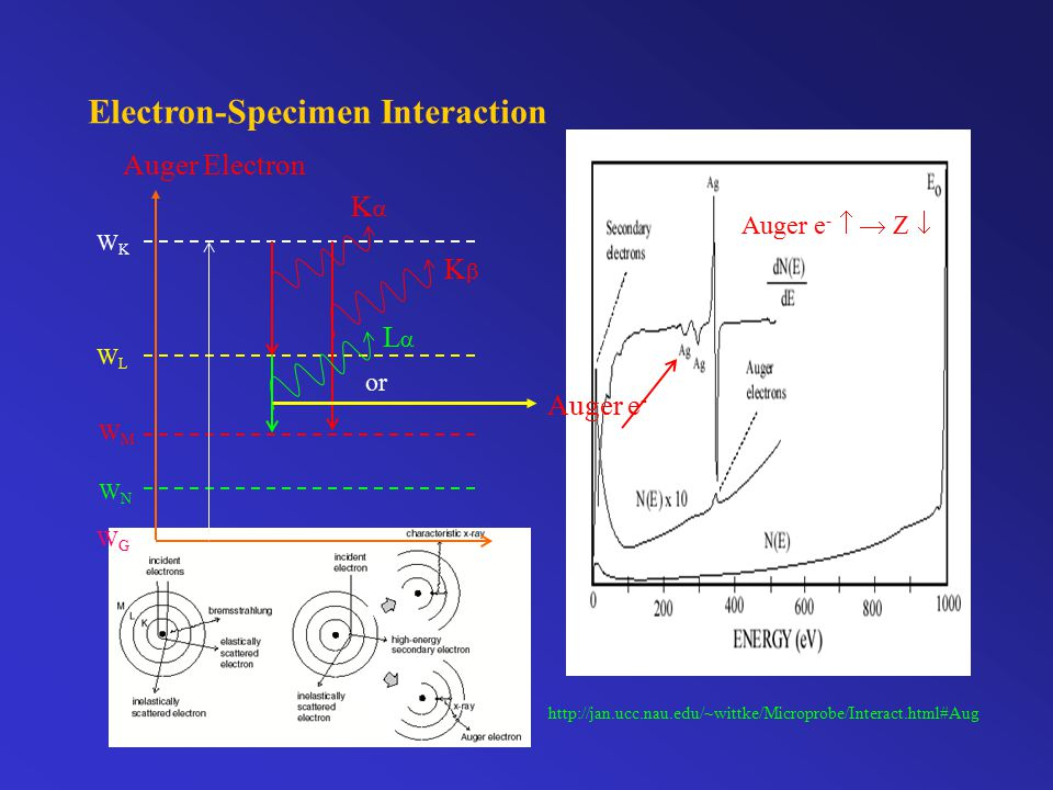 Electron-Specimen Interaction http://jan.ucc.nau.edu/~wittke/Microprobe/Interact.html#Aug Auger Electron WKWK WLWL WMWM WNWN WGWG KK KK LL Auger e - or Auger e -   Z 