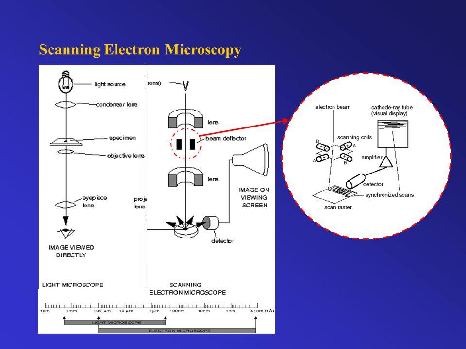 Scanning Electron Microscopy specimen Electron gun