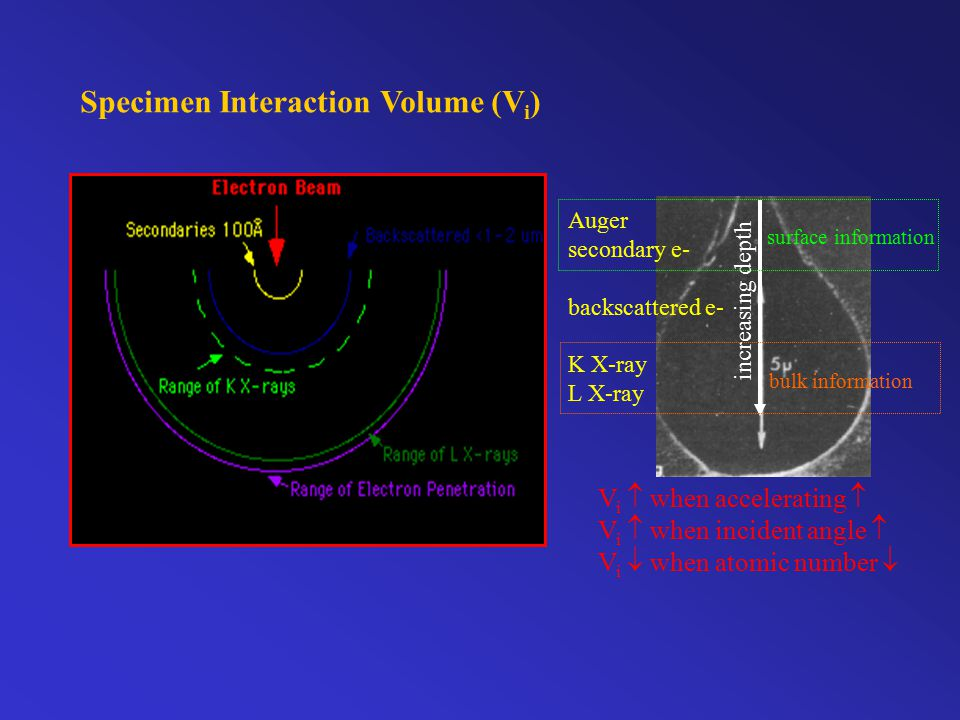 Specimen Interaction Volume (V i ) Auger secondary e- backscattered e- K X-ray L X-ray increasing depth surface information bulk information V i  when accelerating  V i  when incident angle  V i  when atomic number 