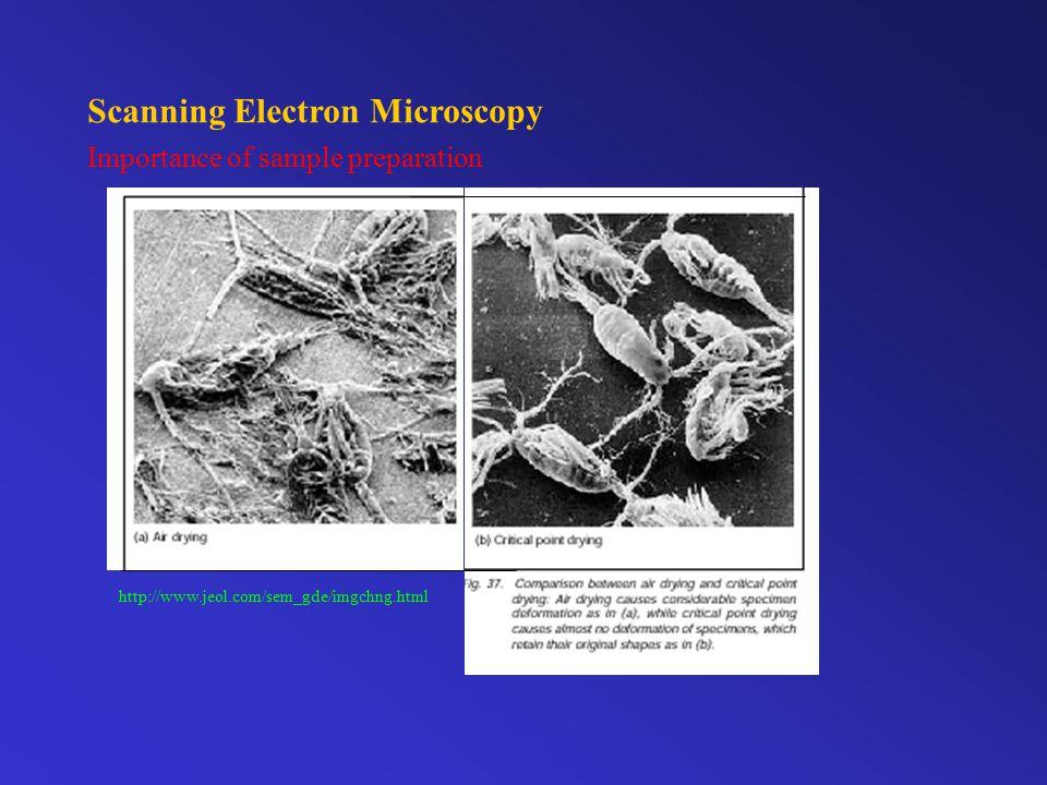 Scanning Electron Microscopy Importance of sample preparation http://www.jeol.com/sem_gde/imgchng.html
