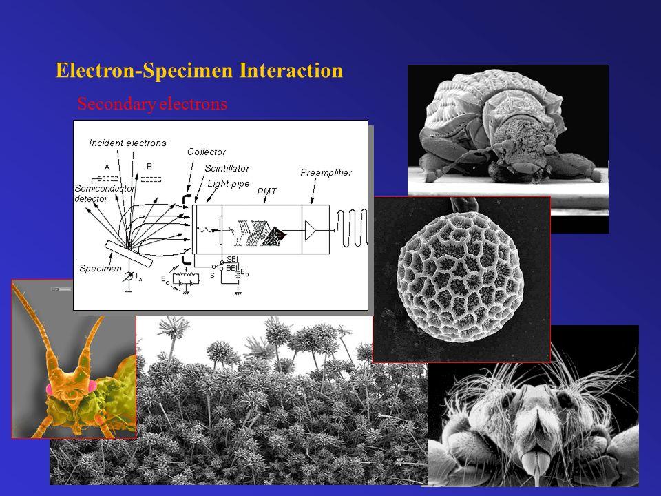 Electron-Specimen Interaction Secondary electrons