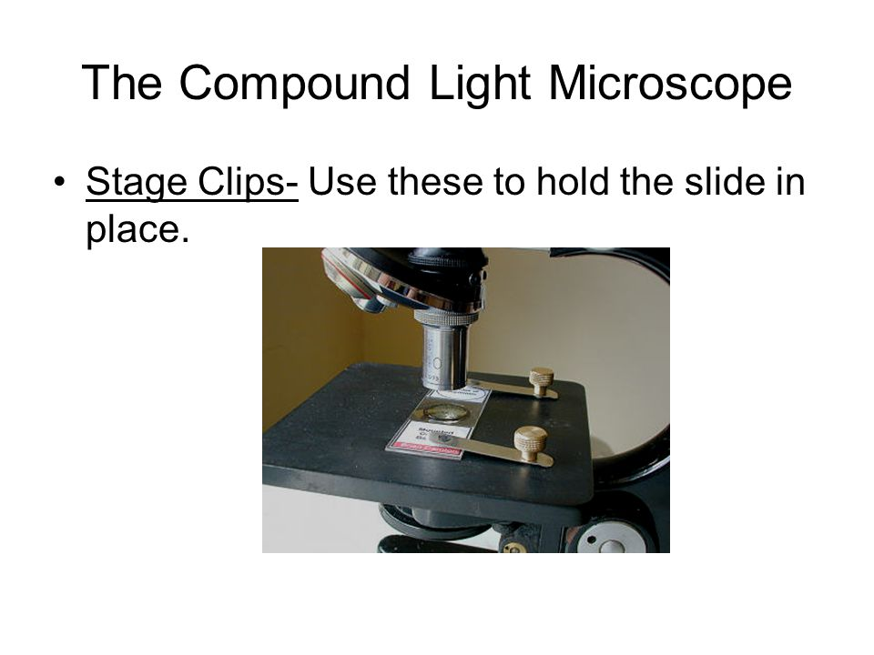 The Compound Light Microscope Stage Clips- Use these to hold the slide in place.
