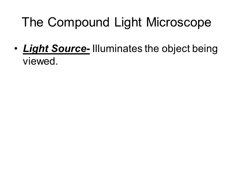 The Compound Light Microscope Light Source- Illuminates the object being viewed.