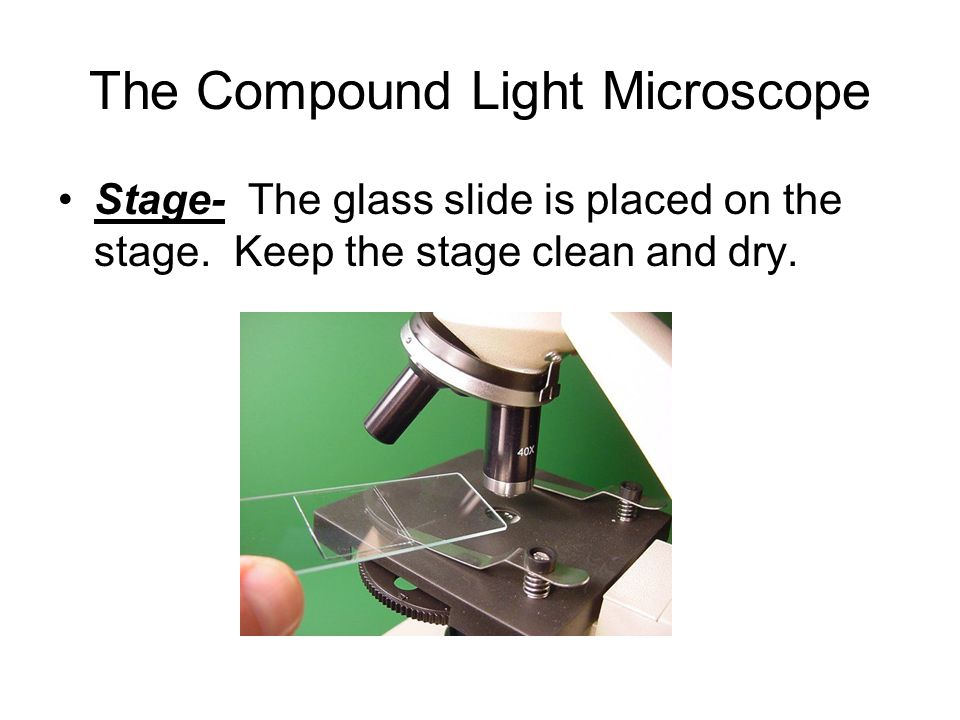 The Compound Light Microscope Stage- The glass slide is placed on the stage.