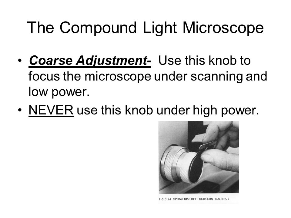 The Compound Light Microscope Coarse Adjustment- Use this knob to focus the microscope under scanning and low power.
